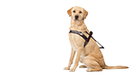 Guide Dogs NSW/ACT website